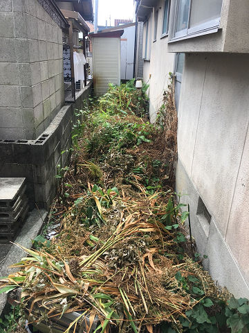 2020/8草刈実績姫路市before